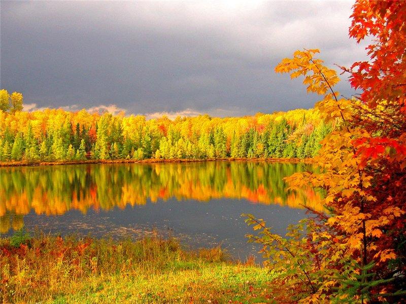 Звуки осеннего леса скачать бесплатно mp3